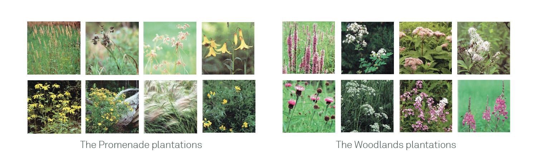 ENG_Simon-Valois-Plantes-01
